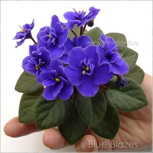Blue Blazes (D.Harrington)