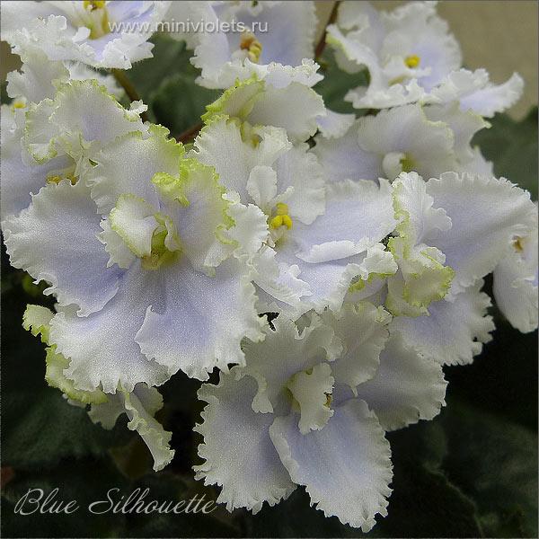 Blue Silhouette (S.Sorano)
