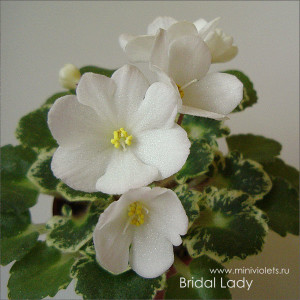 Bridal Lady (N.Johnston)