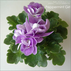 11_peppermint_girl