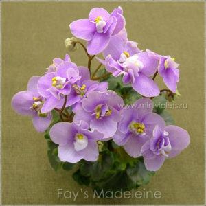 Fay's Madeleine (F.Wagman)
