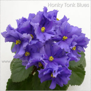 Honky Tonk Blues (LLG/P.Sorano)