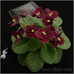 Mac's Black Jack (G.McDonald)