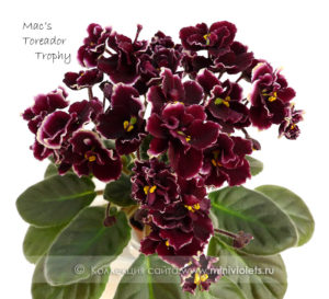 Mac's Toreador Trophy (G.McDonald)