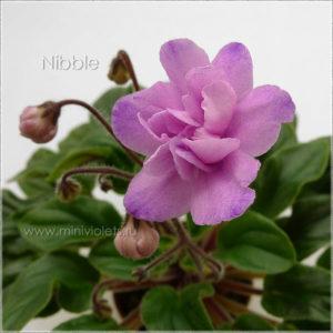 Nibble (S.Sorano)