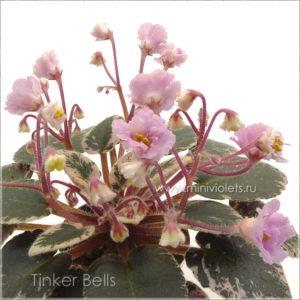 Tinker Bells (H.Pittman)