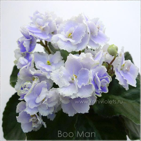 Boo Man