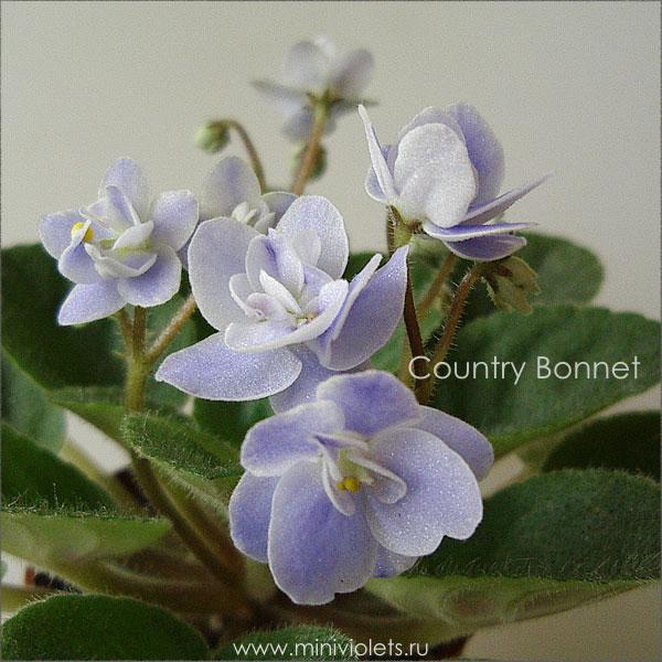 Country Bonnet