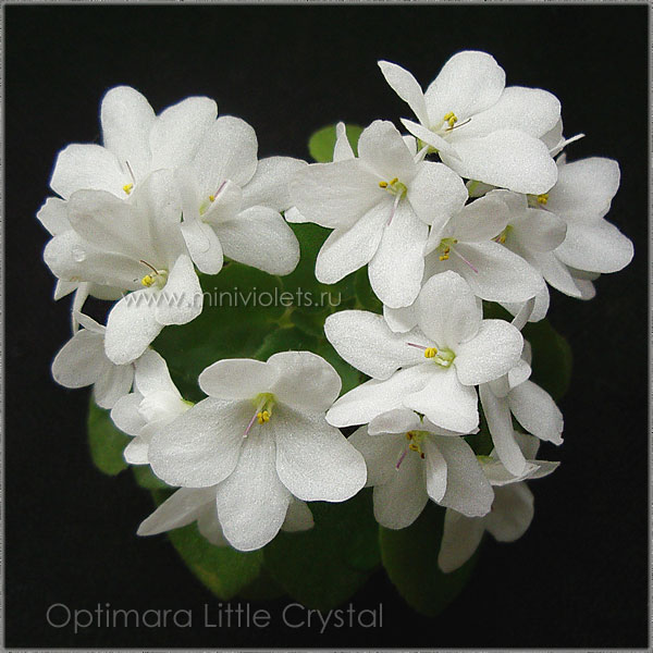 Optimara Little Crystal