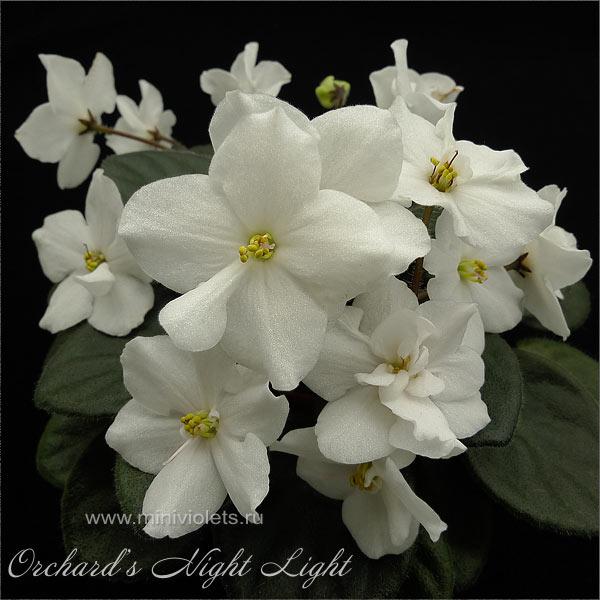 Orchard's Night Light