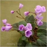 Flashy Trail
