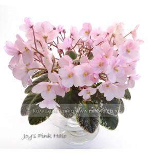 Joy's Pink Halo