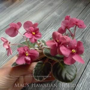 Mac's Hawaiian Holiday