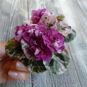 Morgan's Elvin Earl