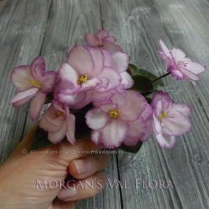 Morgan's Val Flora
