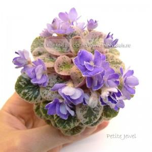 Petite Jewel
