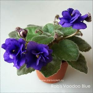 Rob's Voodoo Blue