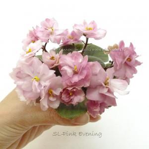 SL-Pink Evening