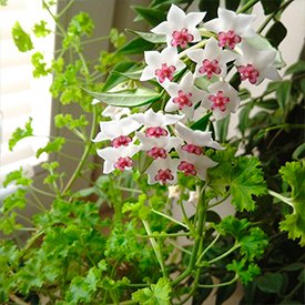 Другие растения